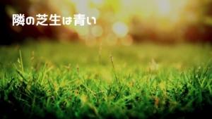 バブル相場で隣の芝生が青い